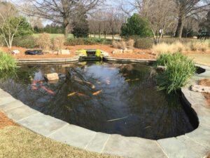 Aquatic Gardens of North Carolina